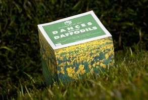 daffodils shot